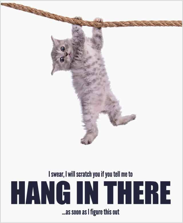 cat poster with trite saying